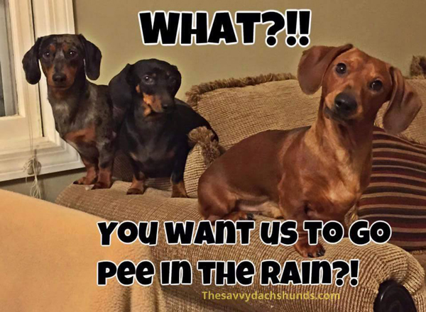 pee-in-the-rain