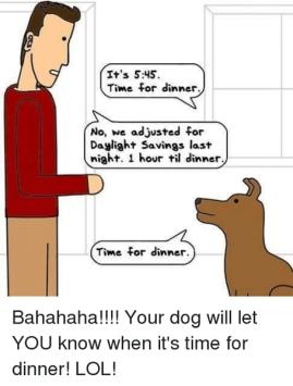 dog-dinner-dst