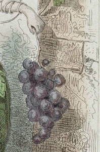 grapes-vine